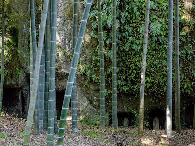Bamboo grove: Jochi-ji