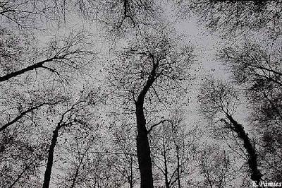 Copas de los árboles a contraluz
