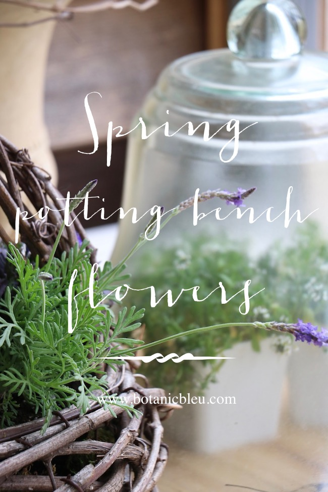 spring potting bench flowers