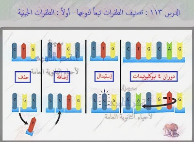 الطفرات – الثالث الثانوى - تصنيف الطفرات تبعاً لنوعها – الطفرات الجينية