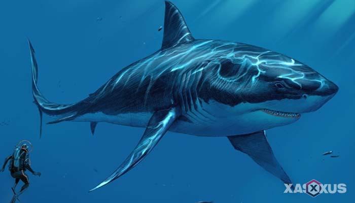 Gambar hewan karnivora atau hewan pemakan daging - Ikan Hiu