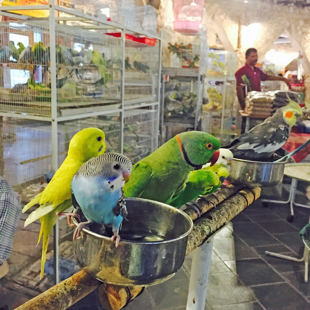 Birds and parrots at Souq Waqif in Doha Qatar