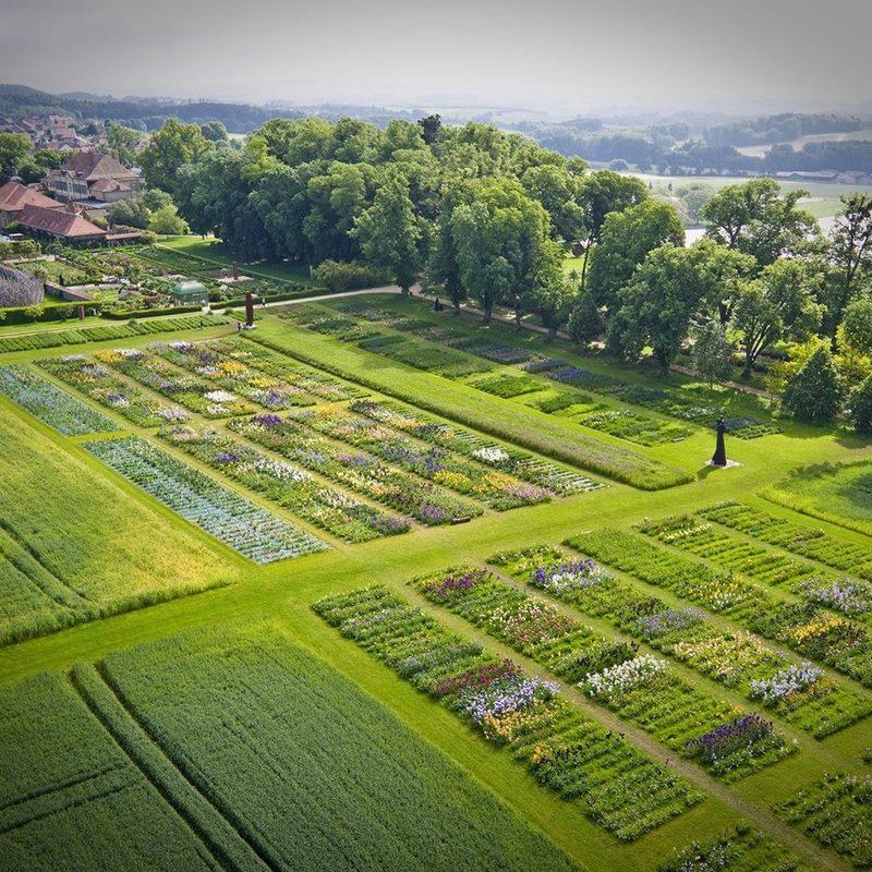 jardin tablas de cultivo de iris