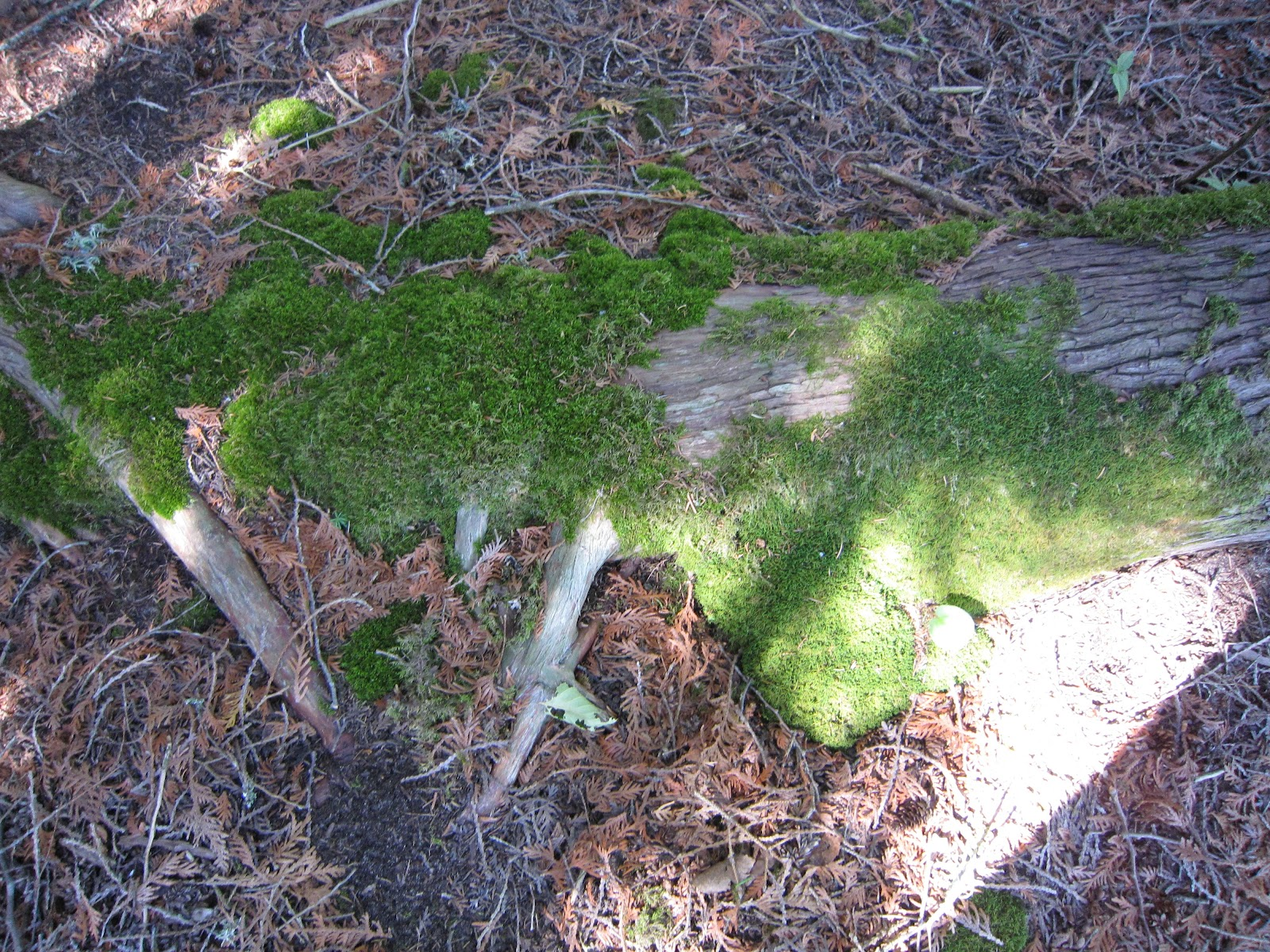 Amy Brown Science Mosses Mosses Mosses