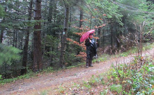 Na początku leśnej dróżki.