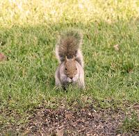 Squirrel 2017