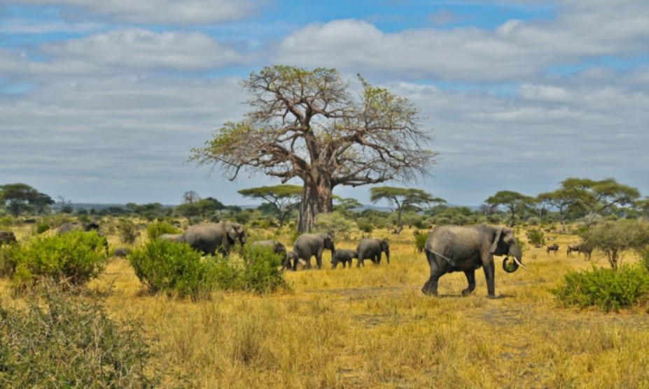 Pengertian Ekosistem Struktur Komponen Jenis Pentingnya Menjaga