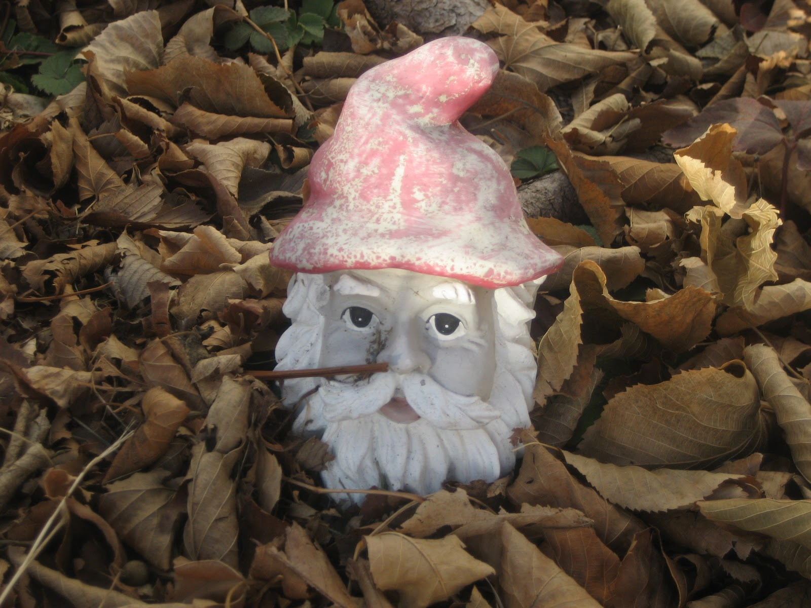 Deaf Dogs and Benevolent Gnomes: December 2011