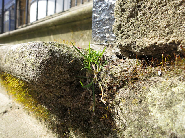 A small clump of wild grass growing at the edge of stone steps to building.