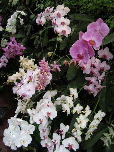 FotoFoto Bunga Anggrek