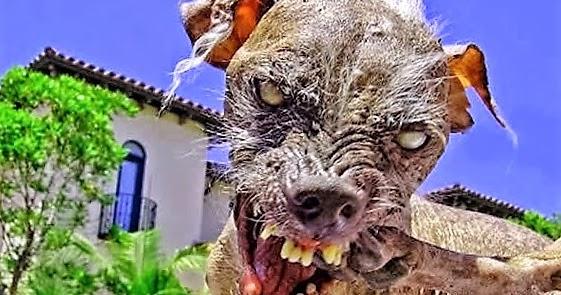 Fieggentrio Top 10 Lelijkste Honden Ter Wereld