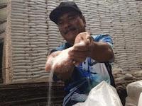 Tragis, 500 Ribu Ton Gula Petani Lokal Belum Terserap
