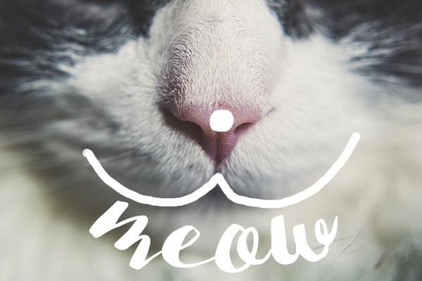 BEDA #8 || Dia Internacional do Gato