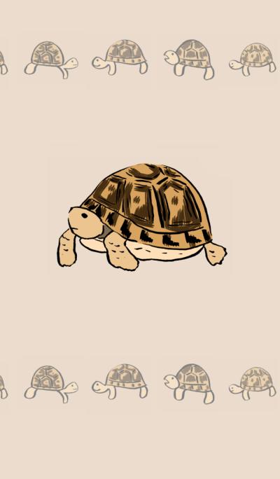 Tortoise theme No.2