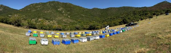 Κάθε μήνα δωρεάν μαθήματα εποχιακών μελισσοκομικών χειρισμών για αρχαρίους απο την ANEL Θεσσαλονίκης