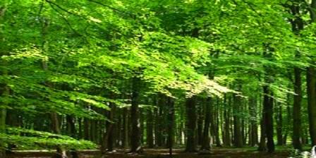 Hutan Suaka Tanjung Paropa, Berbagai tumbuhan liar dan satwa liar dapat Anda temui disini