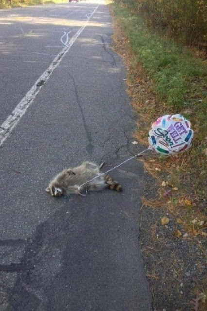 Dead Funny Raccoon Picture - Get Well Soon
