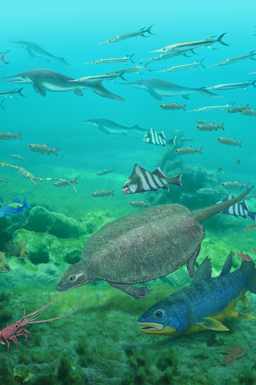 Size not important for fish in the largest mass extinction of all time