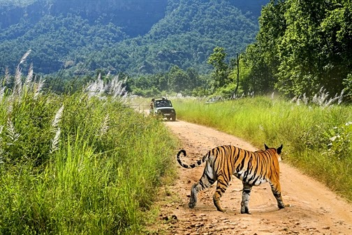 Jim Corbett National Park, Uttarakhand