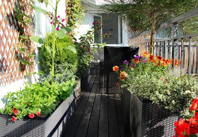 Un jardin de toit