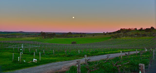 Barossa Valley vineyards by Kyle Taylor