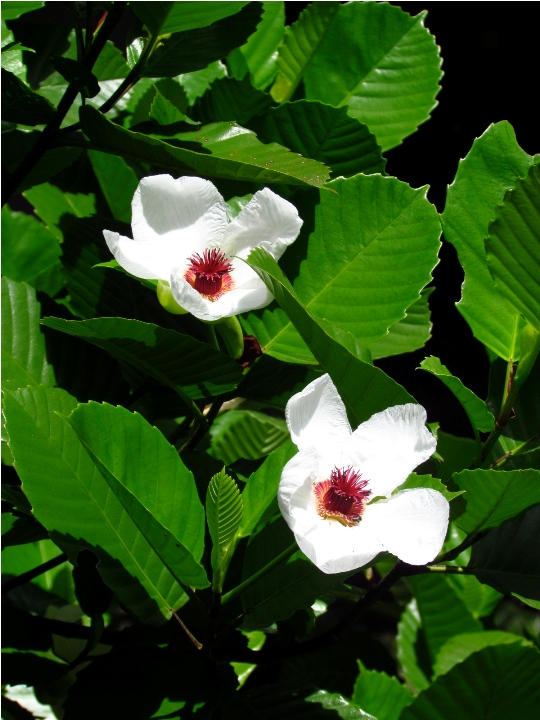 9 Philippine Native Trees Better Than Cherry Blossoms