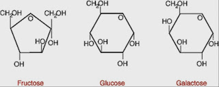Biological Molecules : Synthesis/Hydrolysis and Carbohydrates