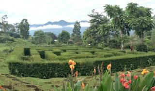 tempat wisata garut kebun mawar