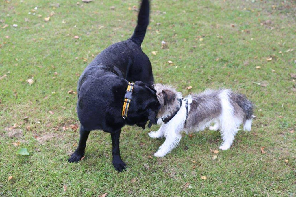 the importance of raising a good guide dog Many visually impaired people are not aware of the benefits of guide dogs or  prefer not to  situations where, by contrast, the presence of a human best friend   also raised, including dog hairs (8%) and problems associated with cleaning  up.