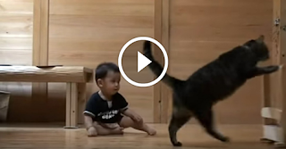 Clever Cat Teaches Baby How To Walk, Because Cats Are Awesome!