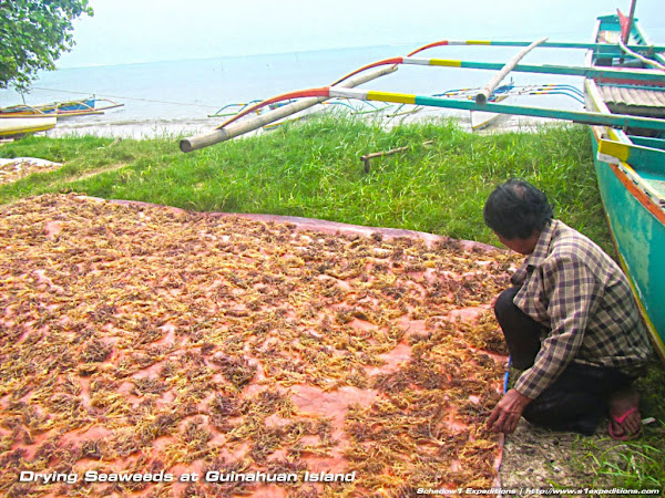 Drying Seaweeds - Guinahuan Island Caramoan - Schadow1 Expeditions