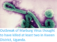 http://sciencythoughts.blogspot.co.uk/2017/10/outbreak-of-marburg-virus-thought-to.html