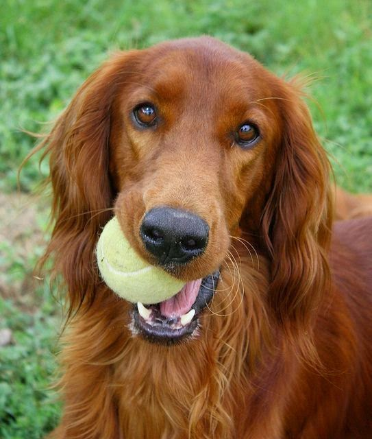 Top 5 Family Friendly Dog Breeds