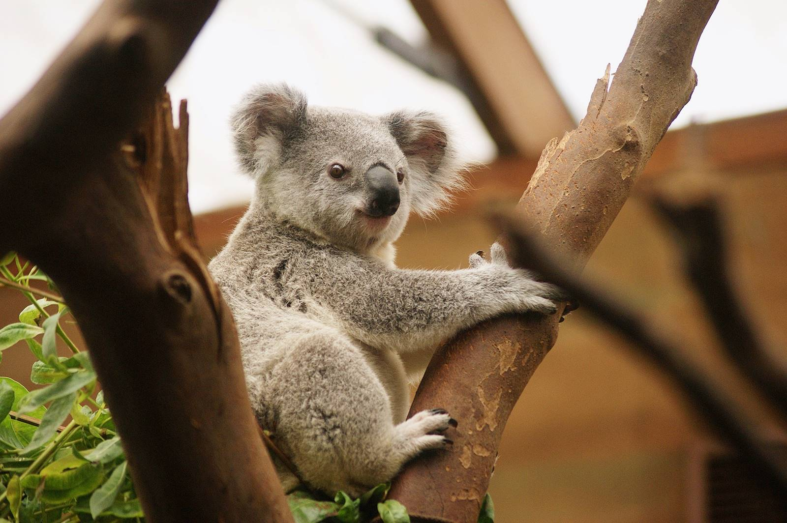 Melbourne-Melbourne Zoo-CBD-Attraction-Recommendation-Map-Itinerary-Tourism-Independent Travel-Travel Blog-Must visit-Must See