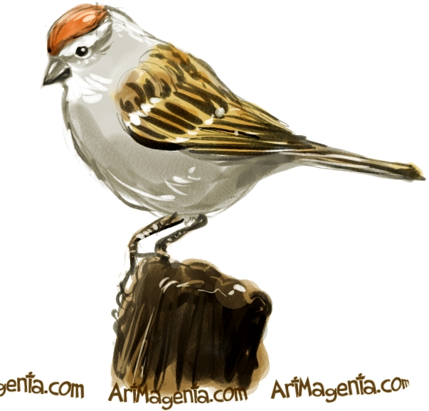 Chipping Sparrow is a bird sketch by Artmagenta