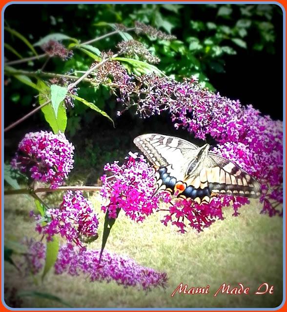 Schwalbenschwanz - Swallowtail