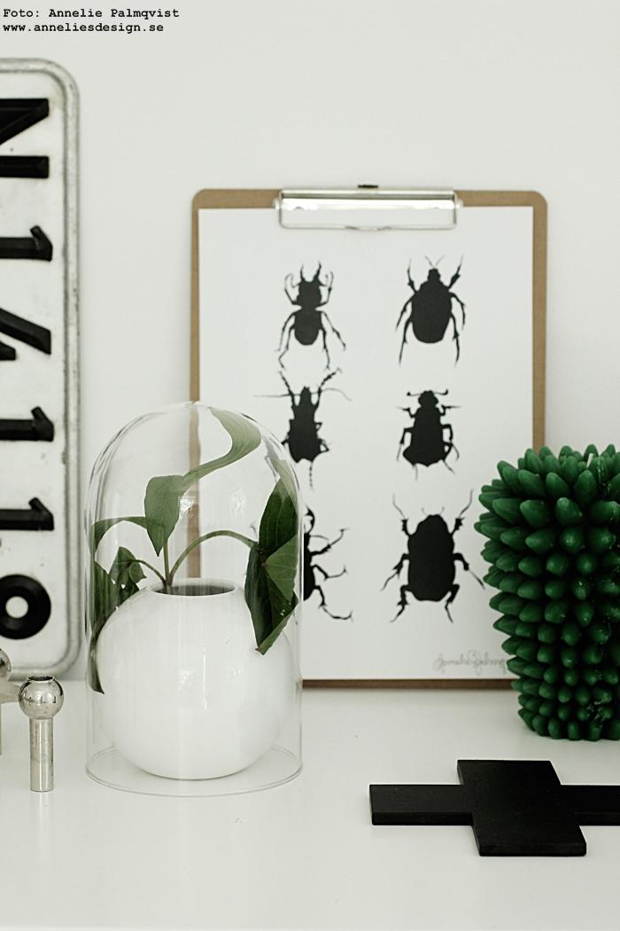 kaktus ljus, kaktusar, svart vitt och grönt, gröna, detaljer, webbutik, webbutiker, webshop, nettbutikk, nettbutikker, inredning, annelies design, anneliesdesign, kors, gammal nummerplåt, registreringsskylt, nagel ljusstake, ljusstakar, konsttryck skalbaggar, skalbagge, tavla, tavlor, poster, posters, print, prints, vitt, vit, vita, interior, grafiskt, grafiska,