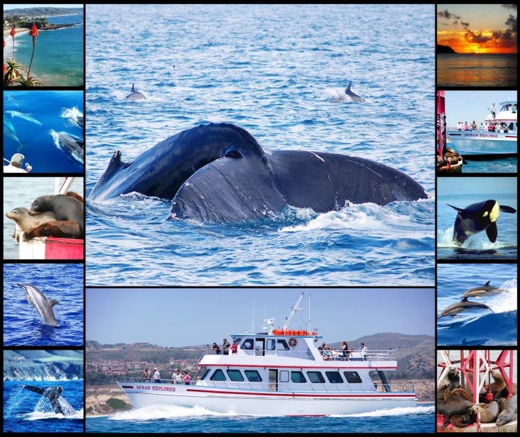 Whale Watching Cruises On A Shoe String From Uk