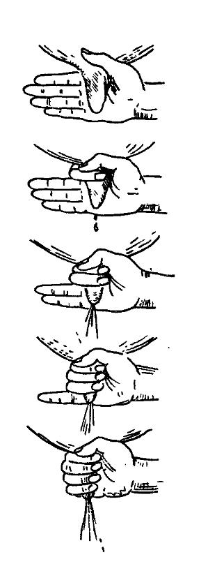 Как правильно доить корову руками:ликбез от дилетанта estimata