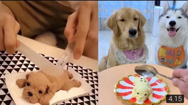 Video Lucu Majikan Prank Anjing - Bikin Ngakak