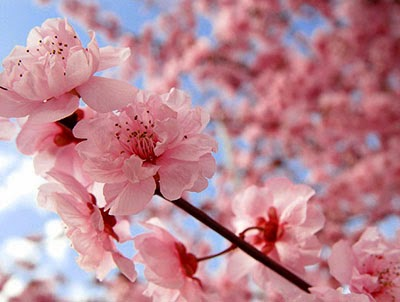 Sister Breksa                                       Native and Popular Flowers of Japan Native and Popular Flowers of Japan