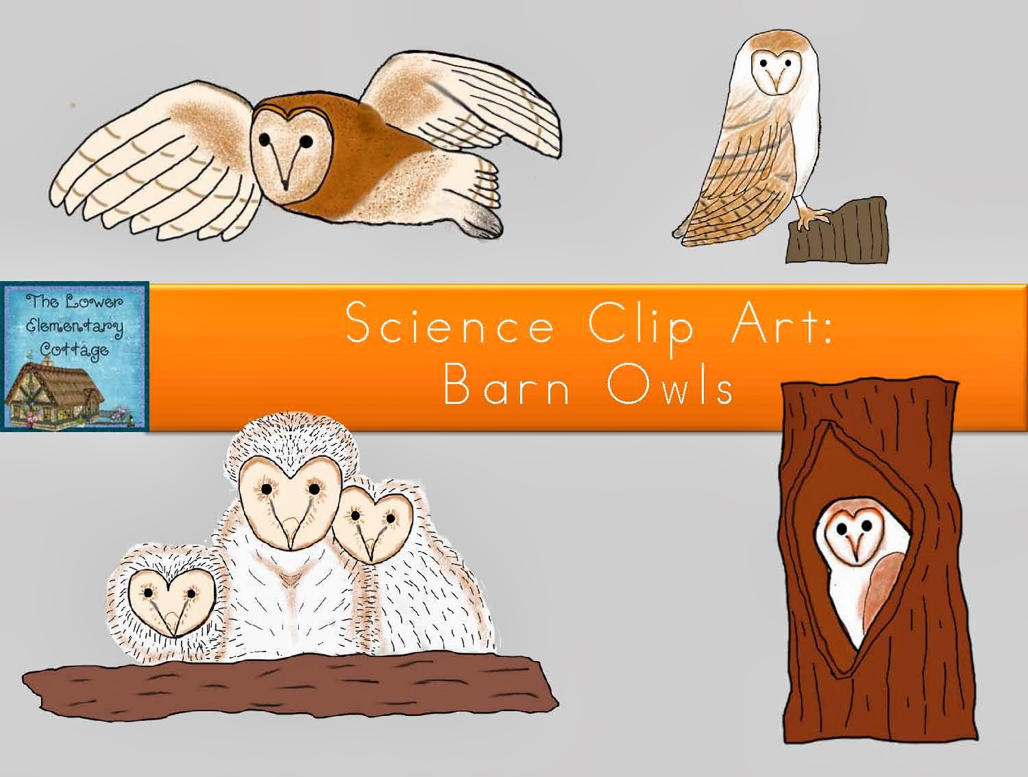 The Lower Elementary Cottage Owl Lessons