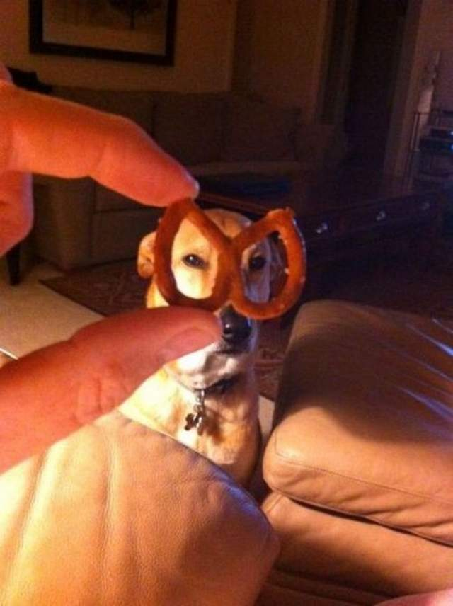 Cute dogs - part 197, funny dog images, best cute dog photos