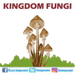 Kingdom Fungi/Jamur (Ciri, Struktur, dan Klasifikasi Kingdom Fungi Beserta Dengan Contohnya)