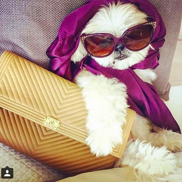 Cuộc sống sang chảnh đến phát ghen của hội... những chú chó nhà giàu trên Instagram