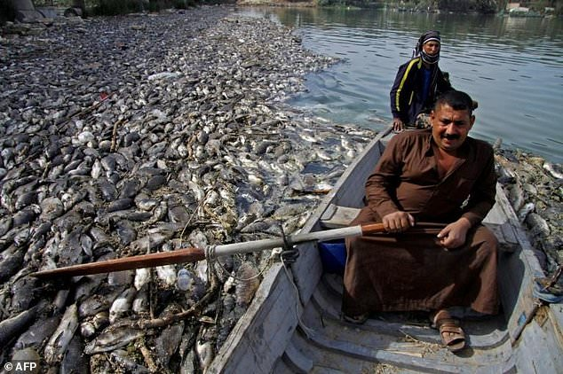 Water crisis developing in Iraq - 100,000 people hospitalized from water pollution - thousands of dead carp wash up Wire-5717728-1541211226-947_634x422
