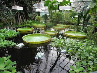 University of Basel Botanical Garden