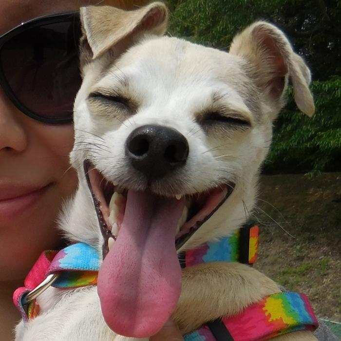 Happy Goes to Korean Dog Park!