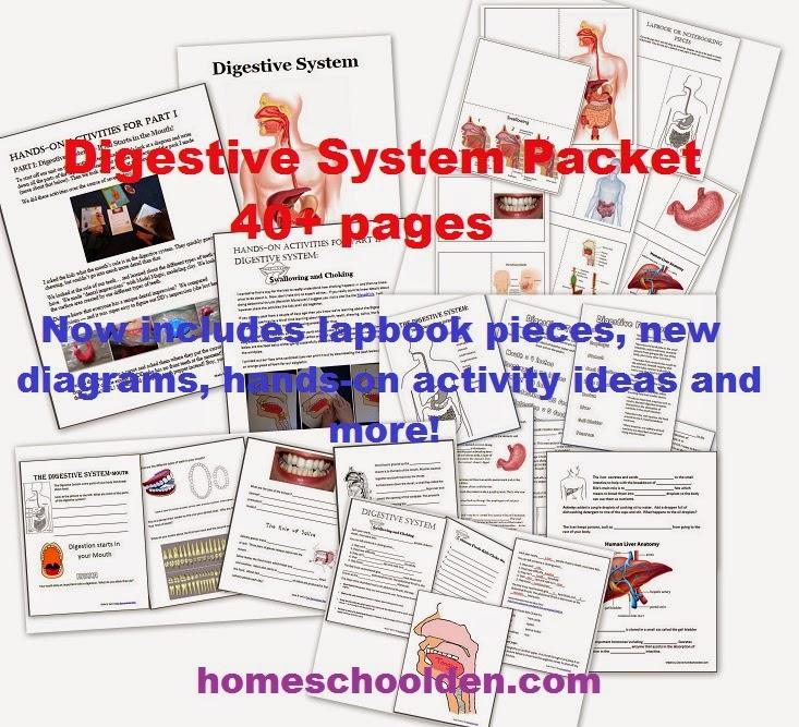 Digestive System Unit Plans
