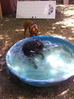 Look at the boy swim